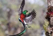 Resplendent delivery © Tyohar Kastiel - Wildlife Photographer of the Year