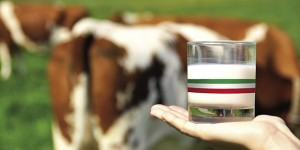 Mondo latte e non solo