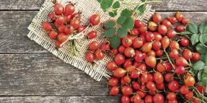 Piccoli frutti dimenticati… Ma dalle mille proprietà