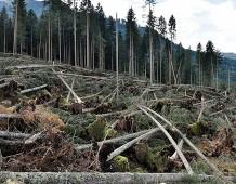 Foreste e cambiamento climatico