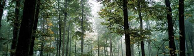 Lo stato delle foreste in Lombardia