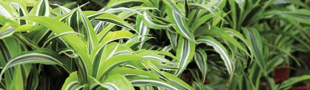 Ultime news piante e fiori infosostenibile - Piante antismog ...