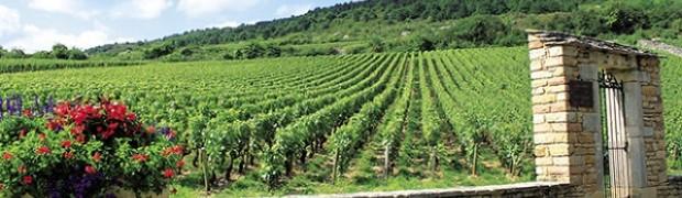 Inverno nelle vigne della Borgogna