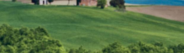 Concedetevi una vacanza intorno a un filo d'erba