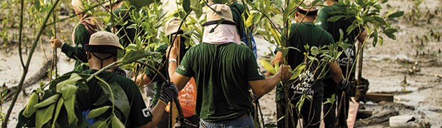 Piccole e grandi storie di resilienza verde per arginare la crisi forestale