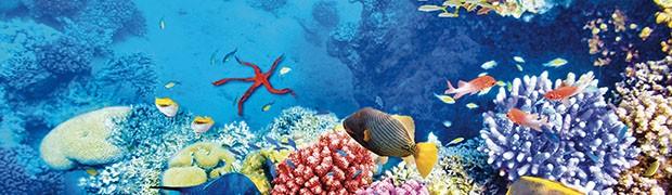 L'Europa e le sfide globali. Ocean's World Day 2019