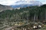 """L'allarme lanciato dal rapporto """"Forest Resources assestment"""" della Fao Necessario un cambio di rotta nel relazione tra uomo e natura"""
