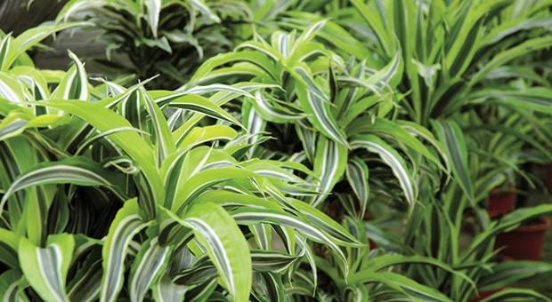 Le piante antismog infosostenibile - Piante antismog ...