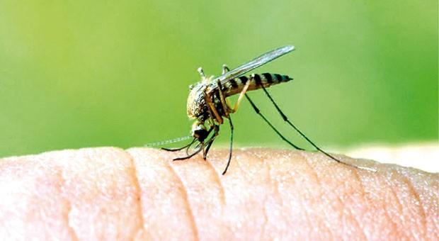 Che fastidio queste punture di insetto infosostenibile for Puntura cimice