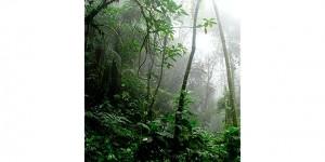 Amazzonia a rischio Covid.