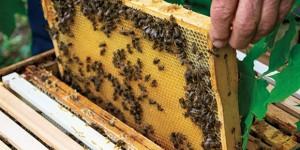 Un percorso... a tutto miele. Cremona Urban Bees