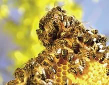 Oltre il miele