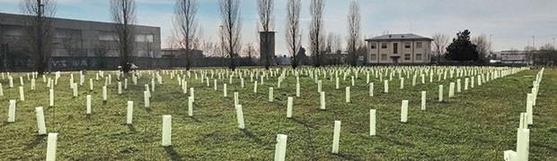 Oltre 1400 nuovi alberi e interventi in parchi e scuole