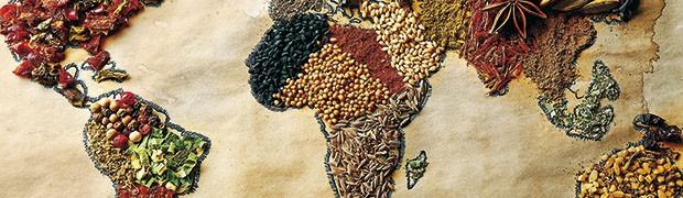 Food for Meet al Mercato della terra