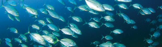 Fish Dependence Day. In Europa il pesce è finito