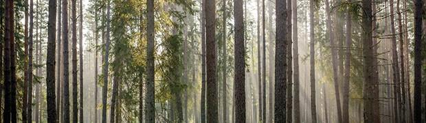In Italia il primo Forum Mondiale sulle Foreste Urbane