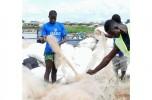 Nuova vita per la plastica in mare che diventa montatura di occhiali